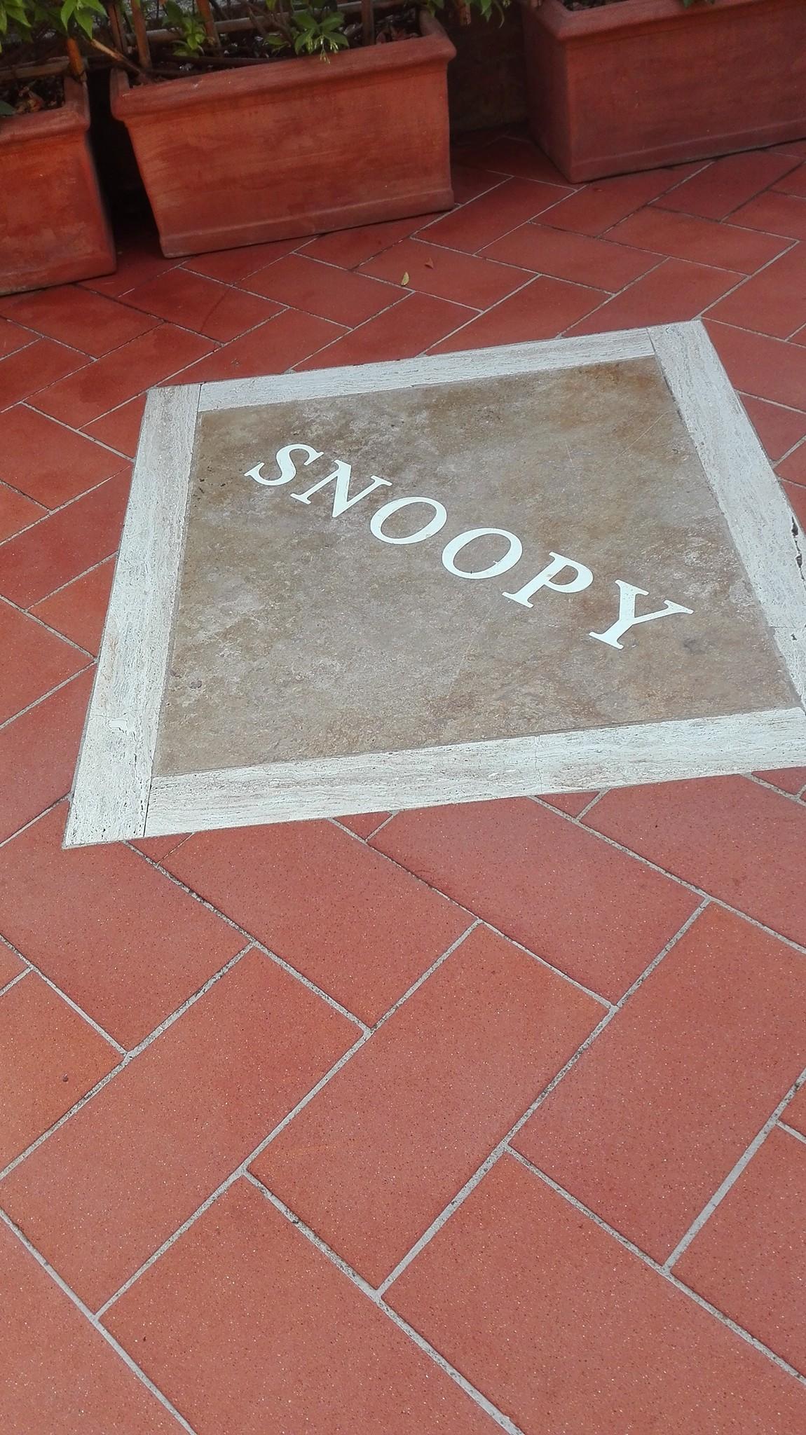 Ripristino Pavimento in cotto esterno presso Bar Snoopy  Pienza (SIENA)